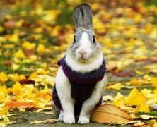 Одежда для кроликов