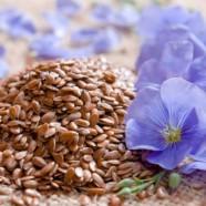Семя льна для похудения