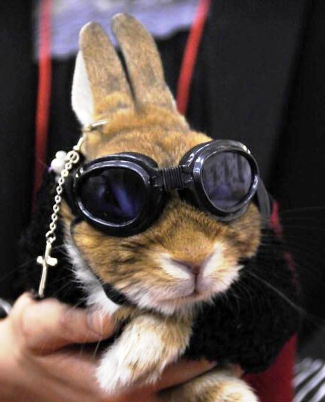Фото кроликов и зайчиков