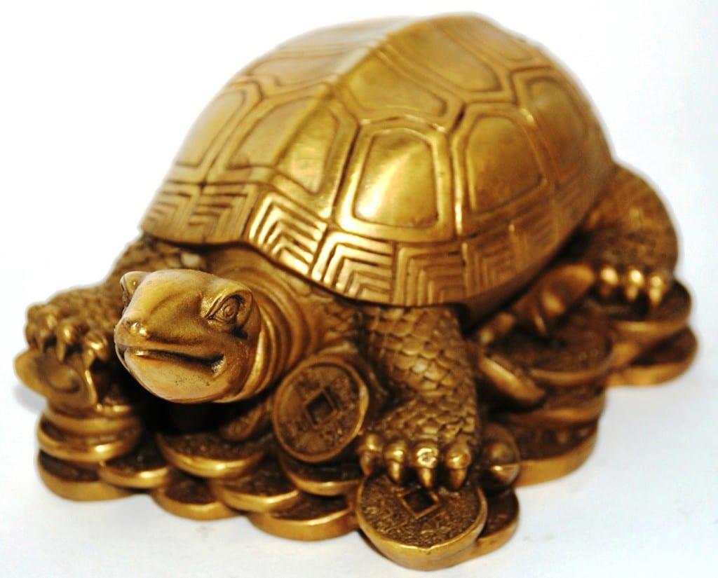 Симовол мудрости - черепаха
