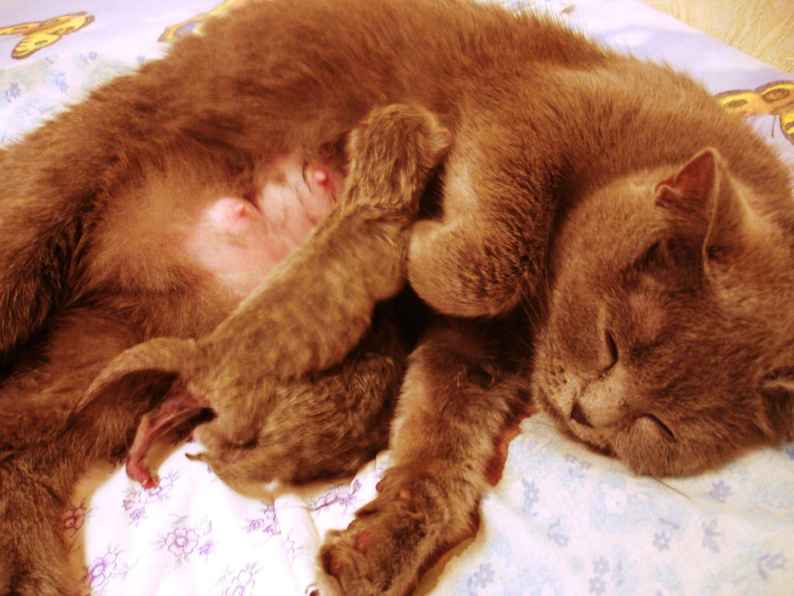 Вызвать в домашних условиях роды у кошки можно при помощи некоторых 29