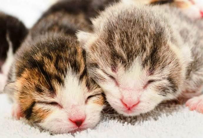 Беременность у кошки длится