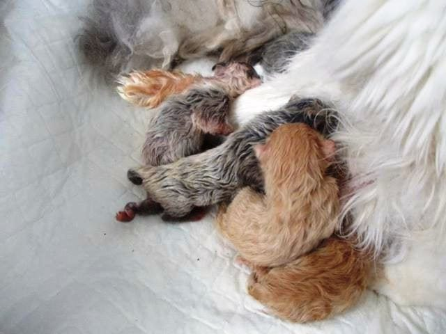 Беременность у кошек длится около 2 х