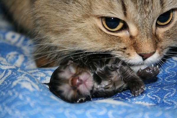 Фото рожденных котят