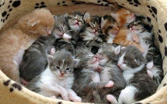 Роды у кошек советы и рекомендации