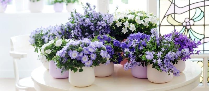 Купить цветы с названием жених и невеста цветы на заказ ровно