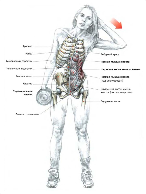 упражнения гантелями сжигания жира