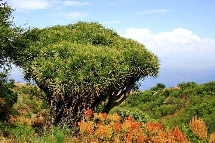Растения в природе