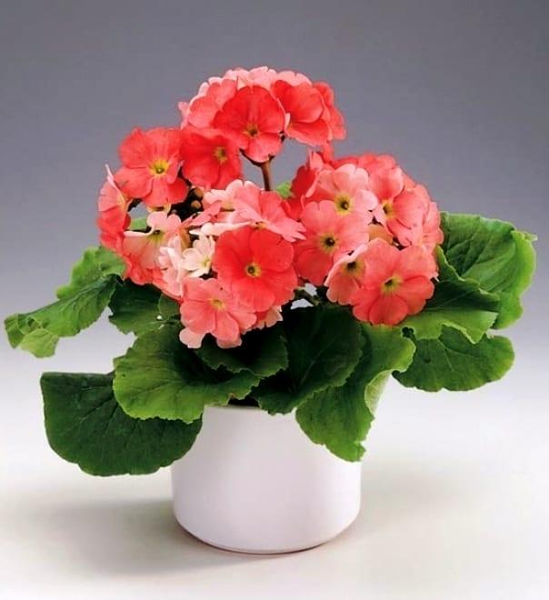 Комнатные цветы - каталог с фотографиями и названиями, виды