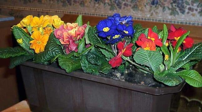 Растения на подоконнике