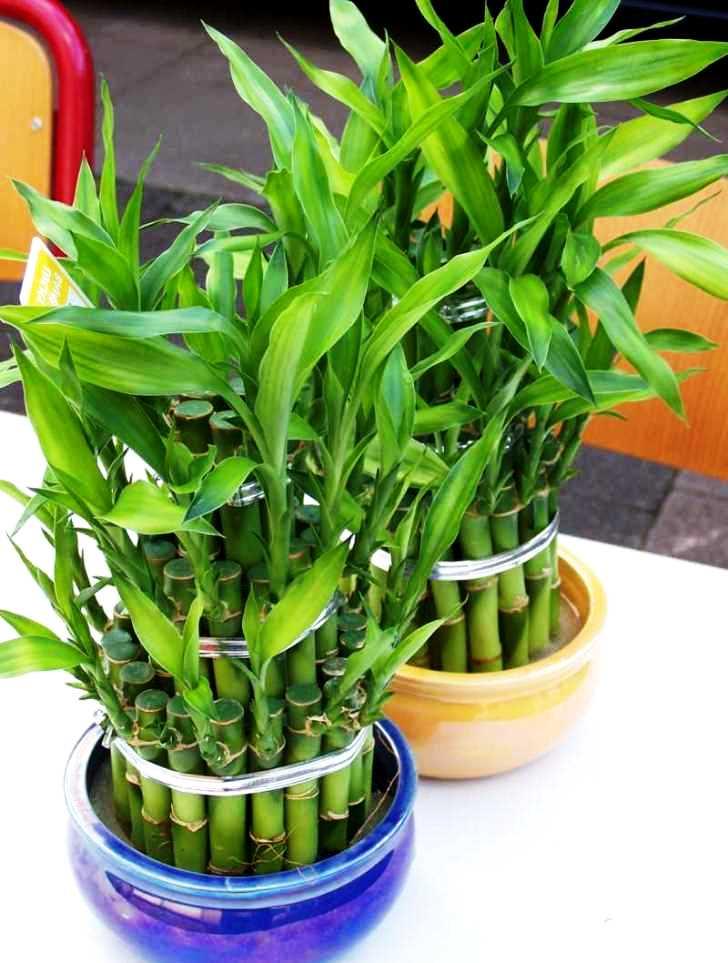 Зеленые кусты на подоконнике
