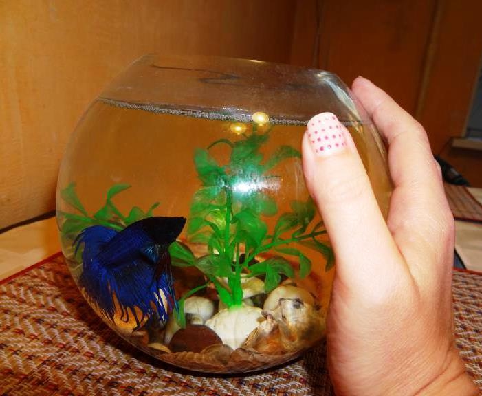 Не скупитесь на большой аквариум
