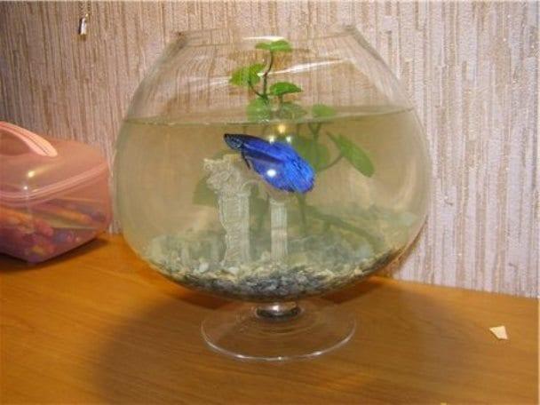 В домике рыбки должно быть много воды