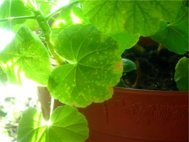 Паразиты комнатных растений