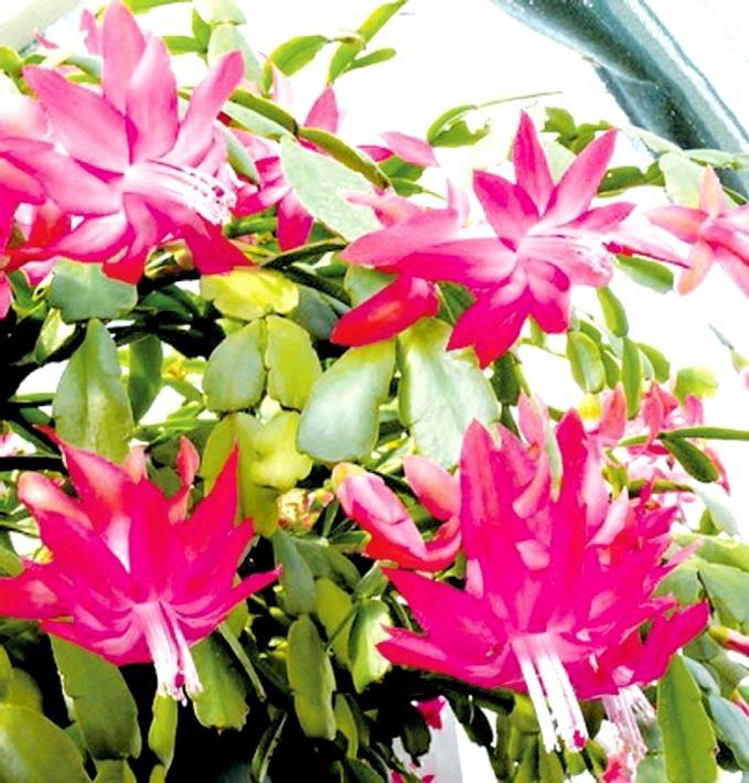 Суккуленты в домашних условиях  FloweryValeru