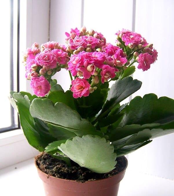 Фото комнатных цветов с мелкими цветочками