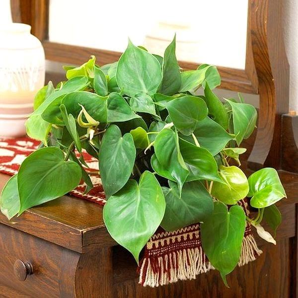 Комнатные цветы для лентяев и