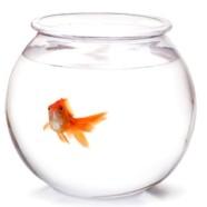 Круглый аквариум: украшение интерьера и смерть для золотой рыбки