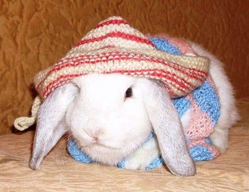 Свитерок для кролика