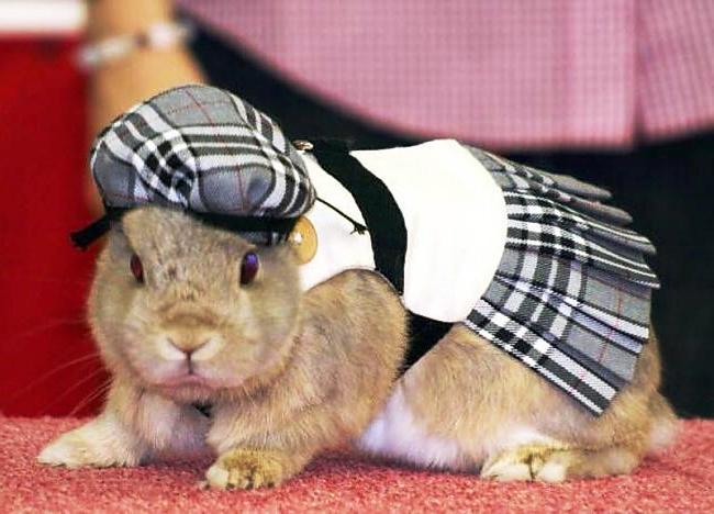 Одежда кролику