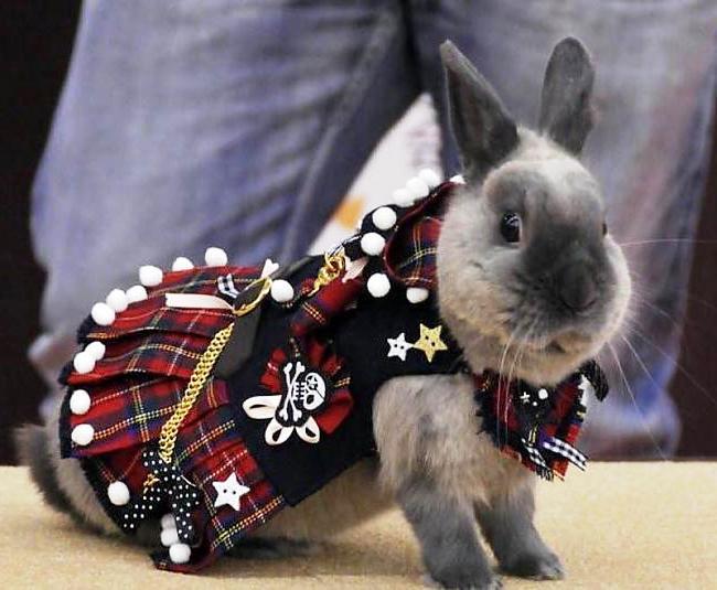 Костюм для кролика