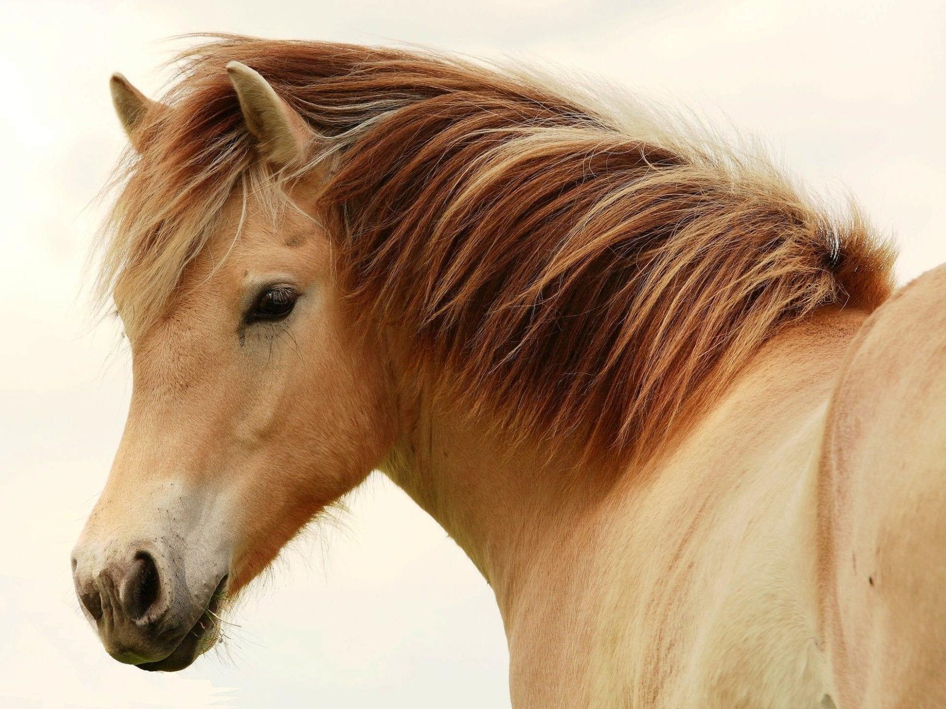 Лошади - благородные животные