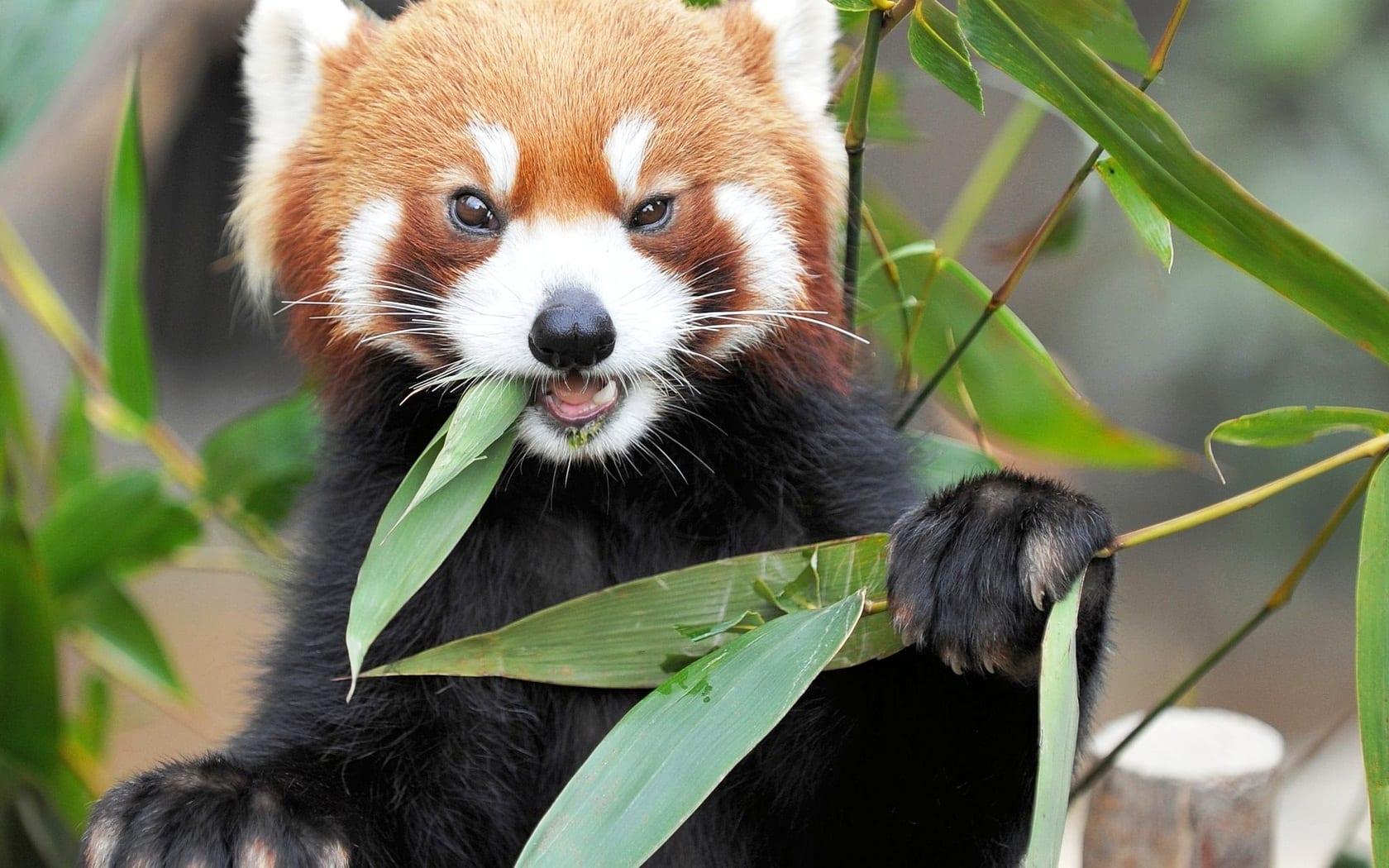 Фото красивых животных мира с названиями