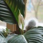 Растение из тропиков