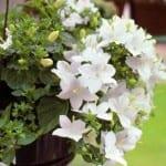 Растения с белыми цветками