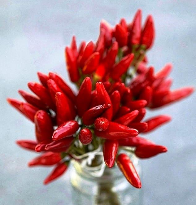 Красный перец для ногтей