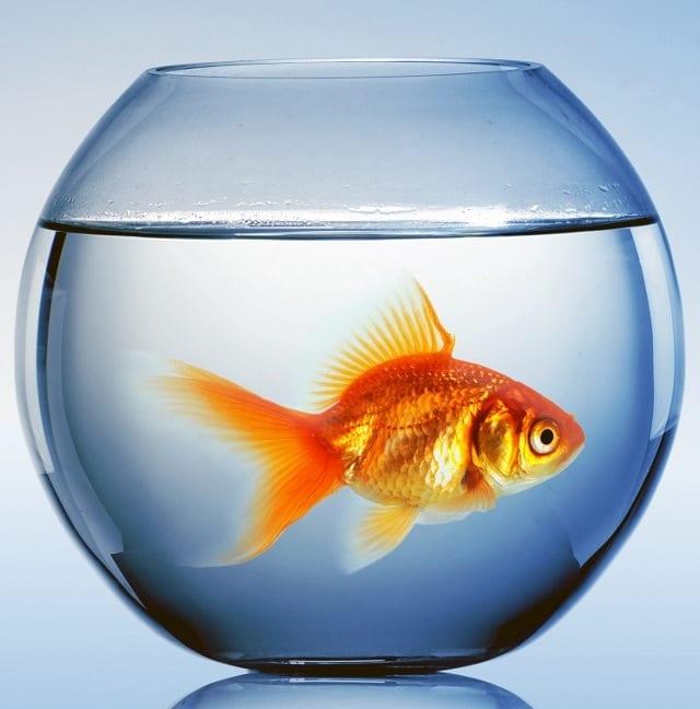 Рыбкам важен кислород