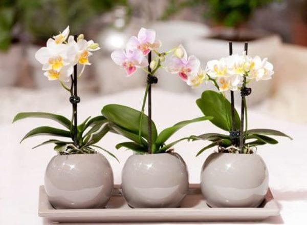 Разведение орхидей дома