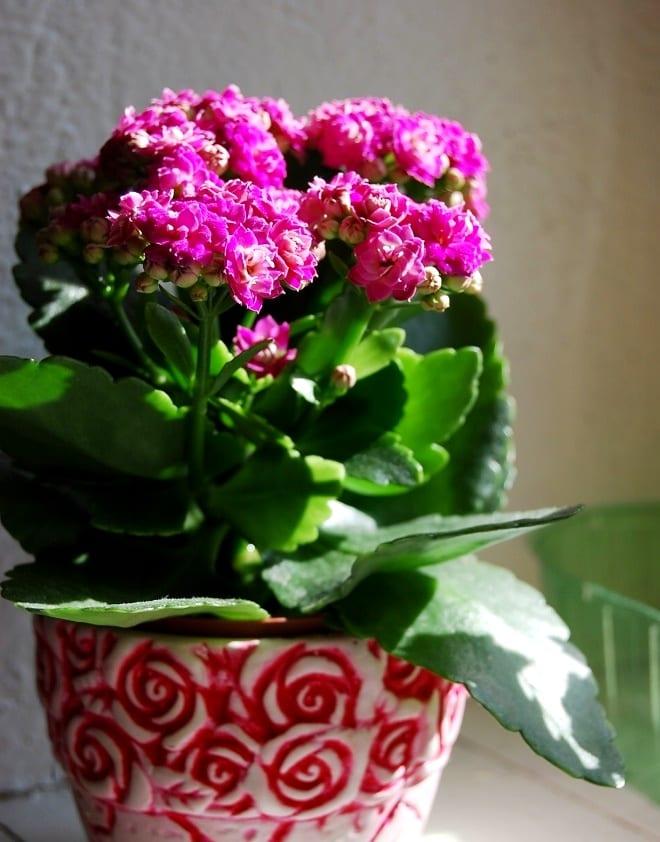 Домашнее цветоводство
