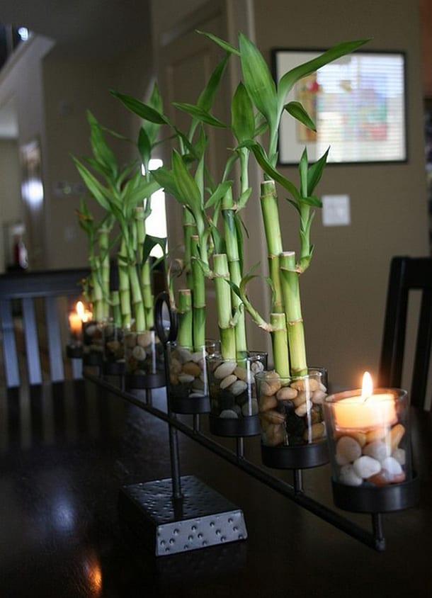 Бамбук в горшках